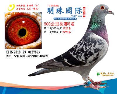 2019武威明珠8