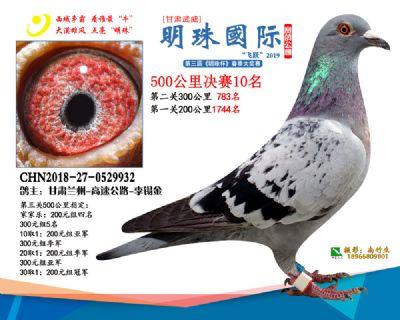 2019武威明珠10