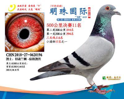 2019武威明珠11