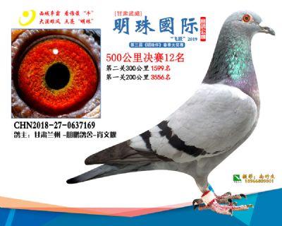 2019武威明珠12