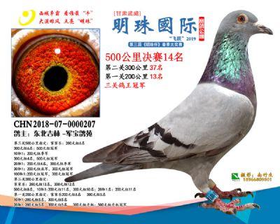 2019武威明珠14