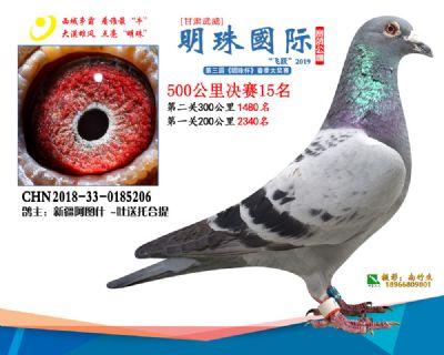 2019武威明珠15