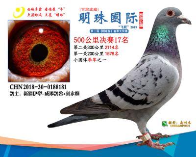 2019武威明珠17