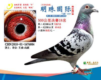 2019武威明珠18