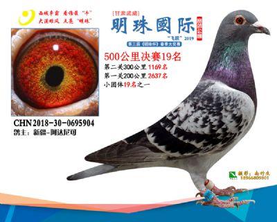 2019武威明珠19