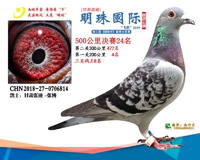 2019武威明珠24