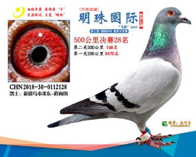 2019武威明珠28