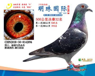 2019武威明珠32