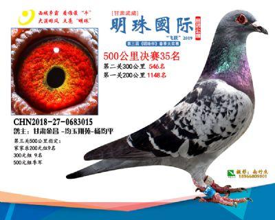 2019武威明珠35