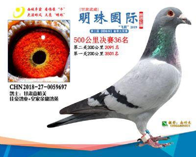 2019武威明珠36