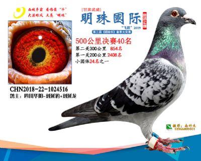2019武威明珠40