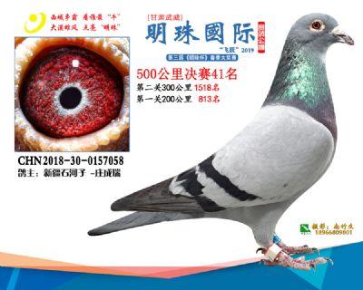 2019武威明珠41