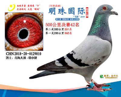 2019武威明珠42