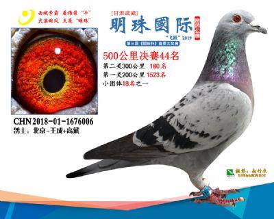 2019武威明珠44