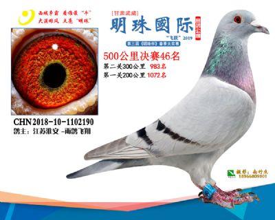 2019武威明珠46