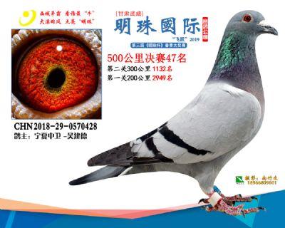 2019武威明珠47