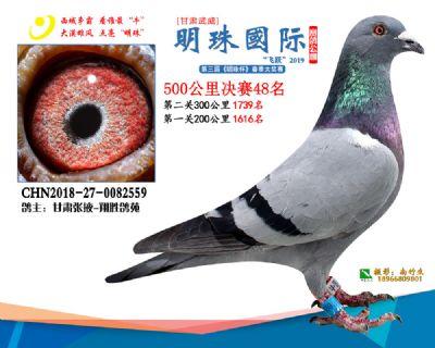 2019武威明珠48