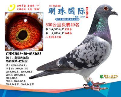 2019武威明珠49