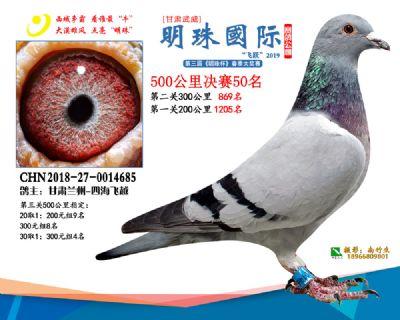 2019武威明珠50