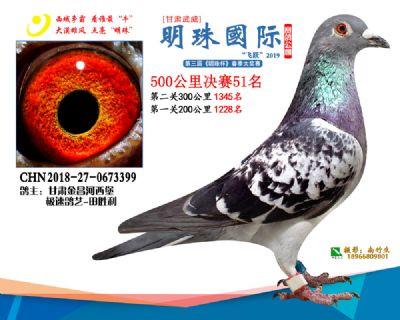 2019武威明珠51