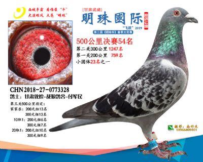 2019武威明珠54