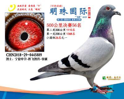 2019武威明珠56