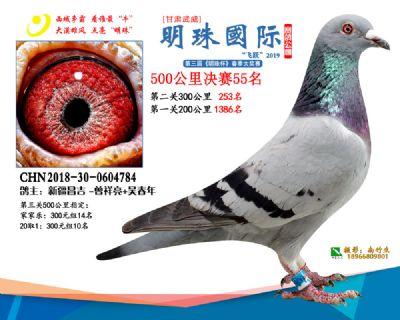 2019武威明珠55