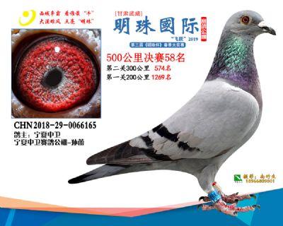 2019武威明珠58