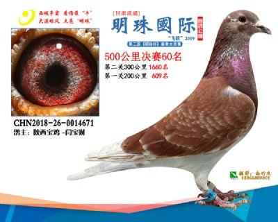 2019武威明珠60