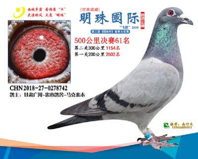 2019武威明珠61