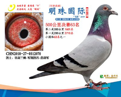 2019武威明珠63