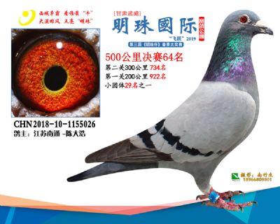 2019武威明珠64