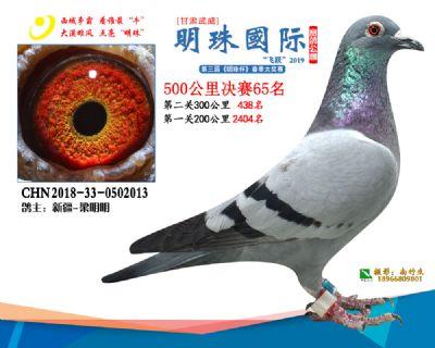 2019武威明珠65