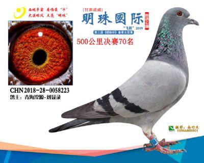 2019武威明珠70
