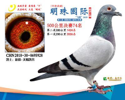 2019武威明珠74