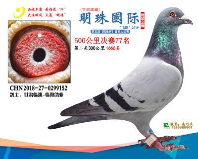 2019武威明珠77