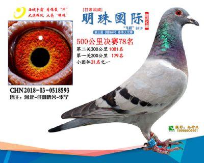 2019武威明珠78