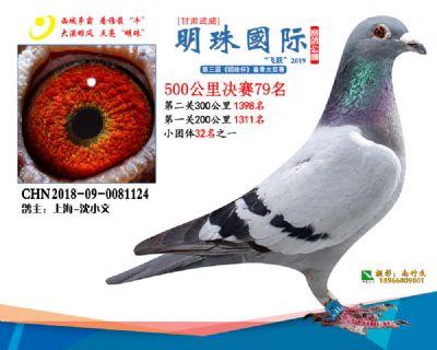 2019武威明珠79