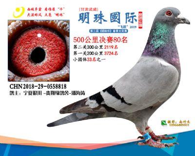 2019武威明珠80