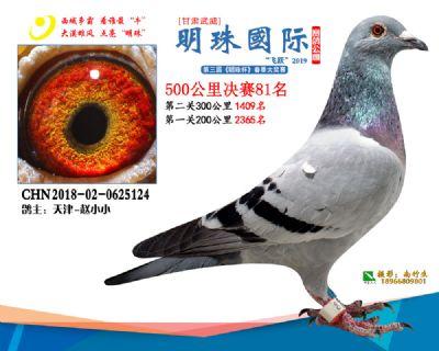 2019武威明珠81