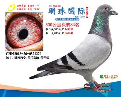 2019武威明珠83