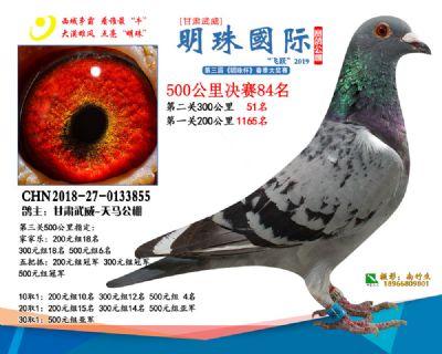 2019武威明珠84