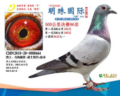 2019武威明珠86