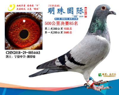 2019武威明珠85