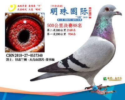 2019武威明珠88
