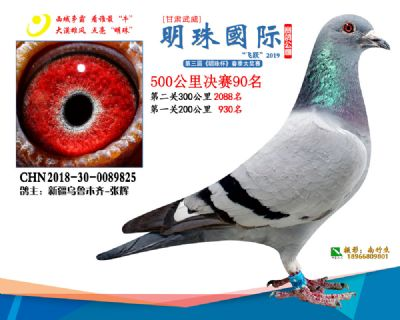 2019武威明珠90