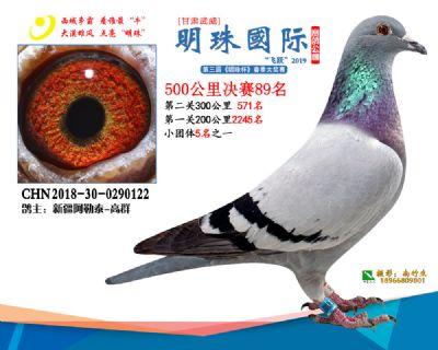 2019武威明珠89
