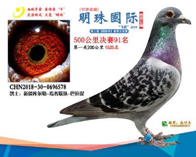 2019武威明珠91