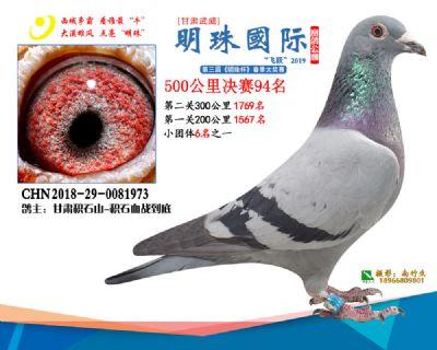 2019武威明珠94