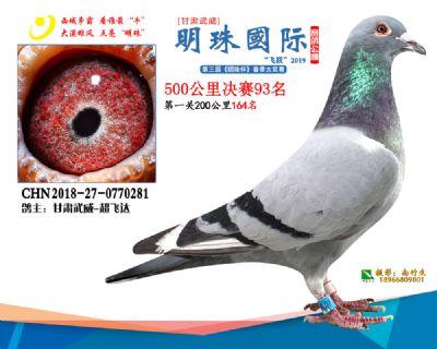 2019武威明珠93